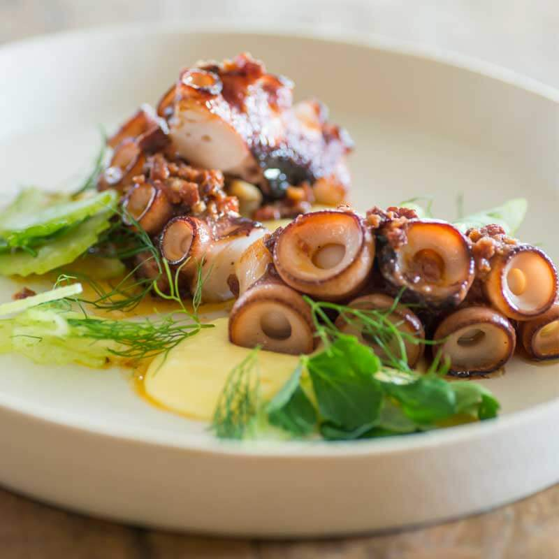 Photo of Octopus