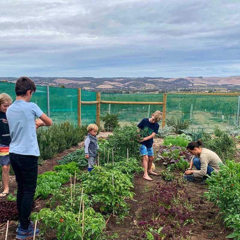 Salopian Kids enjoying the kitchen garden